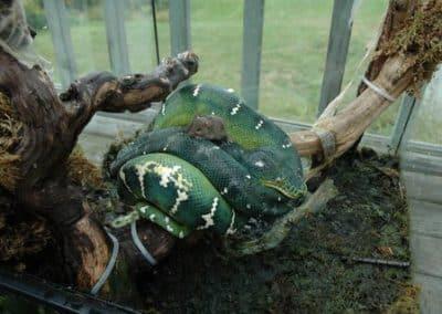 Serpent vert 2
